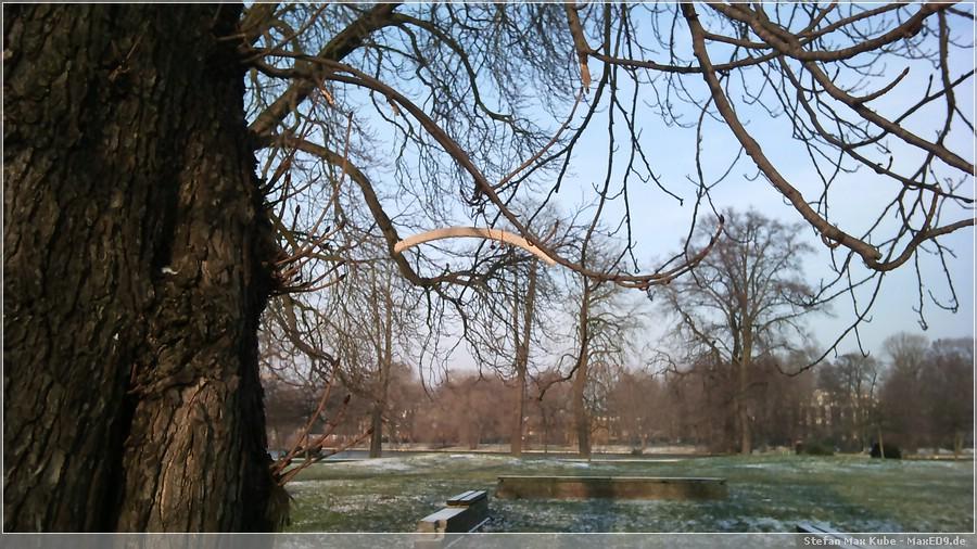 {sosu} Bügel an einem Baum