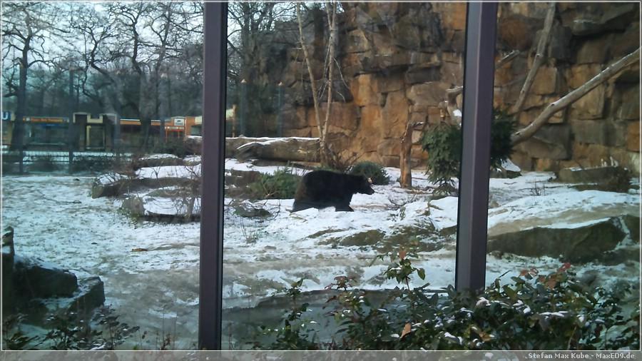 {sosu} Bärenschaufenster am Tierpark