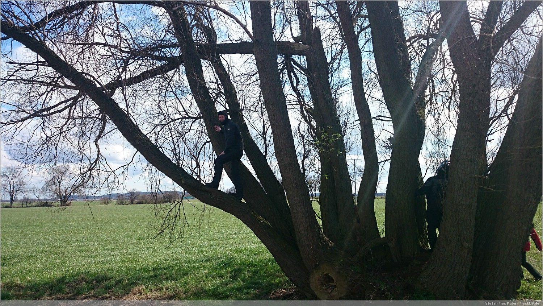 Cacher's Mopped uffm Baum