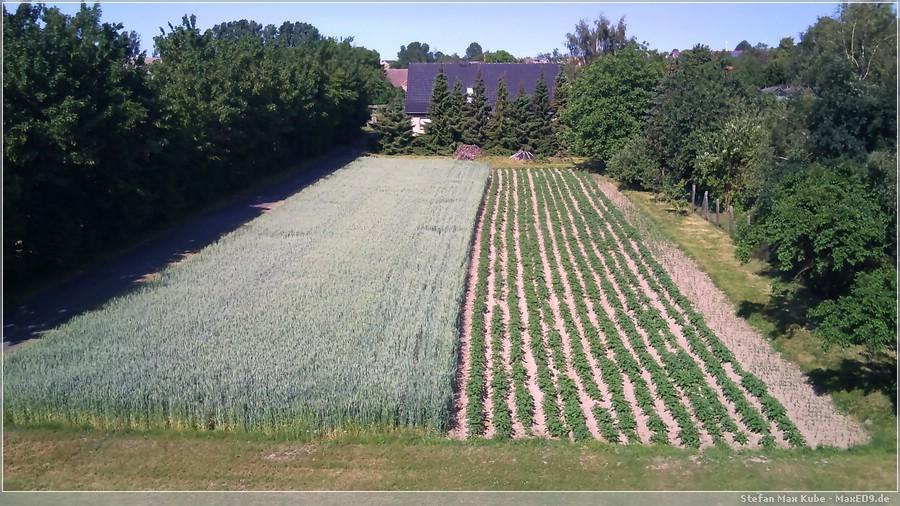 {hfk} Feld hinter der Mühle