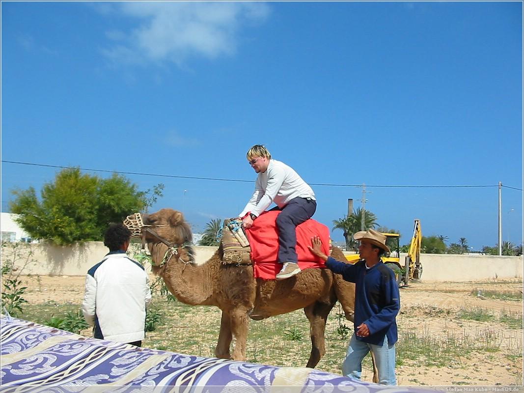 Dromedar-Reiten auf Djerba