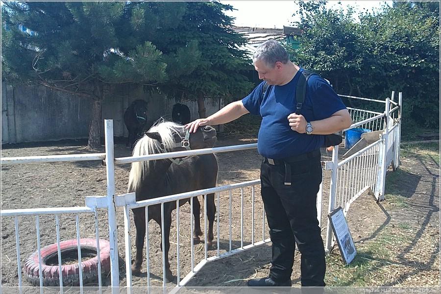 {hvl2} mein Bruder und das grinsende Pony