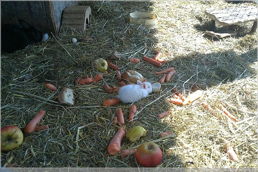 {hvl2} das kleine Kaninchen mit der großen Scheibe Brot