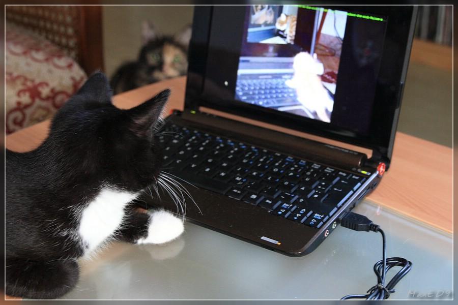 Pasha schaut im Internet, Prudence schaut Pasha zu ;)