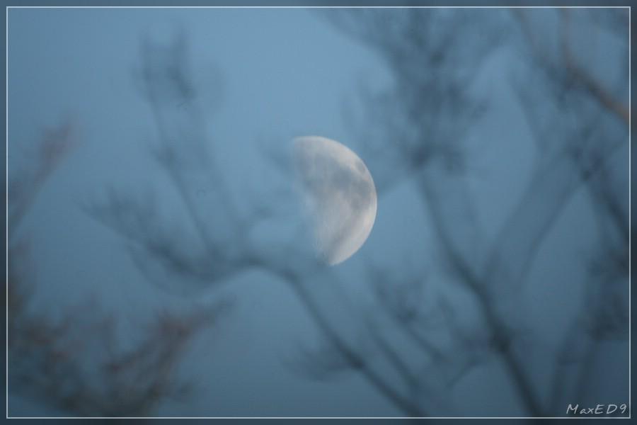 {tagmond} Mond durch einen Baum