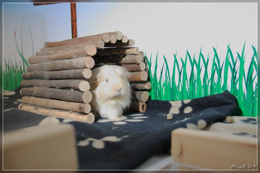 {msh} das erste Schwein erkundet die neue Umgebung