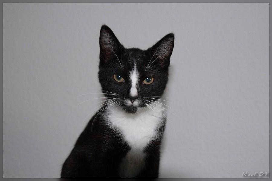 {pdg} Pasha mit 6 Monaten